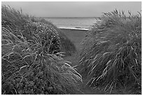 Dune grass and Ocean at dusk, Manchester State Park. California, USA ( black and white)