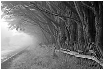Fence, trees, and road in fog. California, USA (black and white)