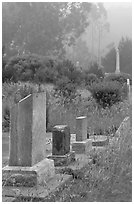 Foggy cemetery, Manchester. California, USA ( black and white)