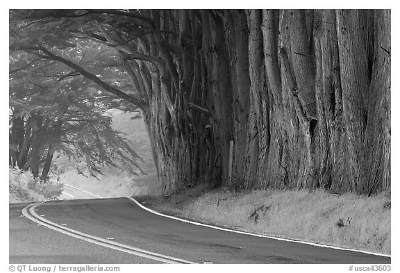 Highway 1 in fog. California, USA (black and white)