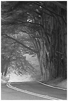 Highway curve, trees an fog. California, USA (black and white)