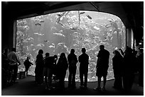 Tourists in front of large tank, Steinhart Aquarium, California Academy of Sciences. San Francisco, California, USA ( black and white)