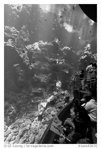 Families look at the large  Philippine Coral Reef tank, California Academy of Sciences. San Francisco, California, USA (black and white)