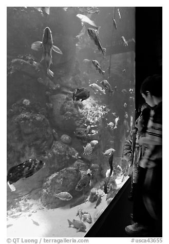 Children looking at colorful fish in tank, California Academy of Sciences. San Francisco, California, USA (black and white)