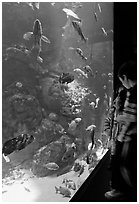 Children looking at colorful fish in tank, California Academy of Sciences. San Francisco, California, USA ( black and white)
