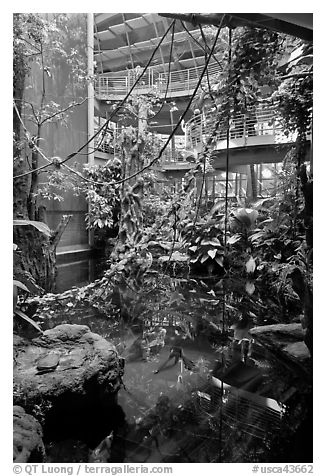 Inside rainforest dome, with flooded forest below, California Academy of Sciences. San Francisco, California, USA (black and white)
