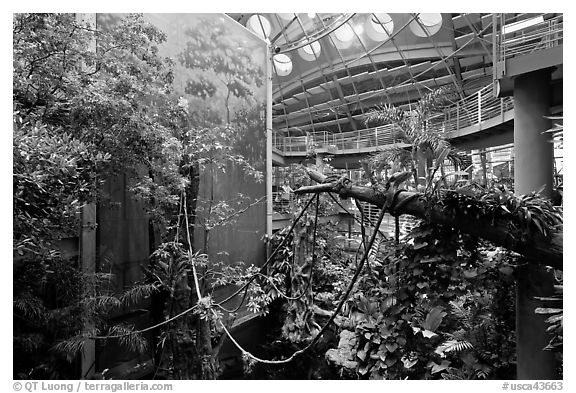 Four-story Rainforest exhibit, California Academy of Sciences. San Francisco, California, USA (black and white)