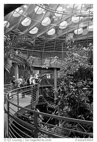 Tourists on spiraling path look at rainforest canopy, California Academy of Sciences. San Francisco, California, USA (black and white)
