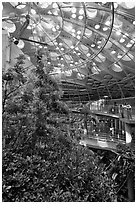 Domed rainforest, California Academy of Sciences. San Francisco, California, USA ( black and white)