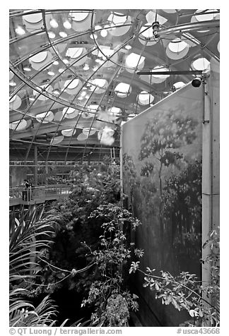 Rainforest canopy and dome, California Academy of Sciences. San Francisco, California, USA (black and white)