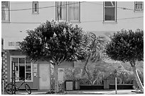 Store, trees and mural, Mission District. San Francisco, California, USA ( black and white)