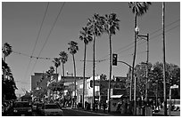 Palm-lined section of Mission street, Mission District. San Francisco, California, USA (black and white)