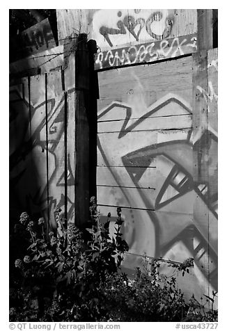 Flowers and painted wall, Mission District. San Francisco, California, USA (black and white)