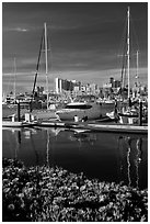 Flowers, Oakland skyline, and Alameda marina. Oakland, California, USA (black and white)