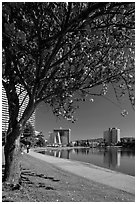 Lake Merritt in the spring with  Pink Flowering Almond. Oakland, California, USA ( black and white)