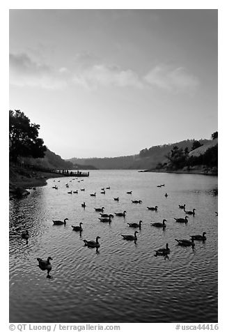 Lake Chabot with ducks at sunset, Castro Valley. Oakland, California, USA