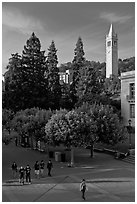 Campus of University of Berkeley with Campanile. Berkeley, California, USA (black and white)