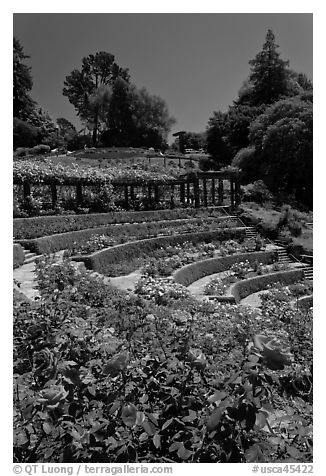 Berkeley Rose Garden. Berkeley, California, USA