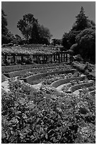 Berkeley Rose Garden. Berkeley, California, USA ( black and white)