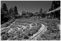 Terraced Amphitheater, Rose Garden. Berkeley, California, USA ( black and white)