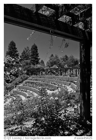 Berkeley Municipal Rose Garden. Berkeley, California, USA (black and white)
