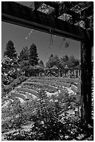 Berkeley Municipal Rose Garden. Berkeley, California, USA ( black and white)