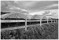 Raspberry cultivation. Watsonville, California, USA (black and white)