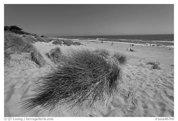 Palm Beach state park. Watsonville, California, USA (black and white)