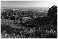 View from Heckler Pass road. Watsonville, California, USA (black and white)