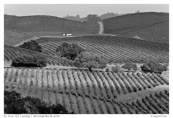 Wine country scenery in Carneros Valley. Napa Valley, California, USA (black and white)