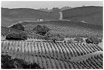 Wine country scenery in Carneros Valley. Napa Valley, California, USA ( black and white)