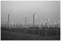 Altamont wind farm at dusk. California, USA (black and white)