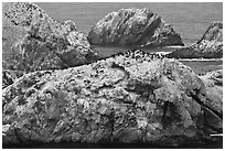 Bird island. Point Lobos State Preserve, California, USA (black and white)