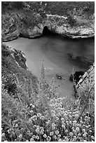 Flowers and cove with green water. Point Lobos State Preserve, California, USA ( black and white)