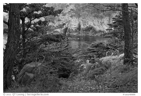 Cypress and wildflowers framing a cove. Point Lobos State Preserve, California, USA (black and white)