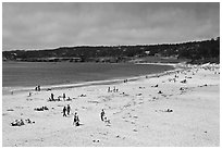 Carmel Beach in summer. Carmel-by-the-Sea, California, USA (black and white)