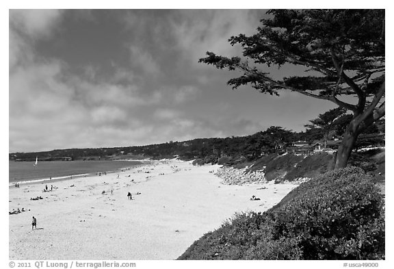 Carmel Beach and cypress. Carmel-by-the-Sea, California, USA (black and white)