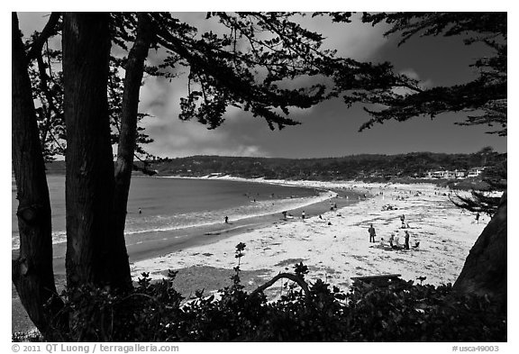 Black and white picture photo carmel beach framed by monterey cypress carmel by the sea california usa