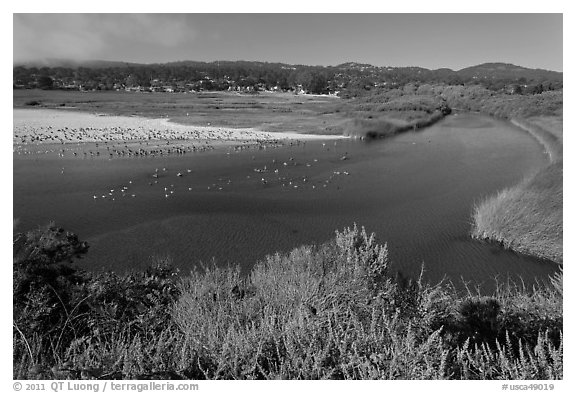 Marsh at the mouth of Carmel River. Carmel-by-the-Sea, California, USA (black and white)