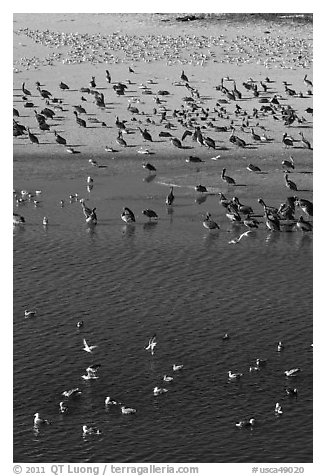 Birds, Carmel River State Beach. Carmel-by-the-Sea, California, USA