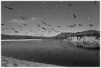 Birds flying above Carmel River. Carmel-by-the-Sea, California, USA (black and white)