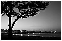 Monterey harbor and cypress tree at sunset. Monterey, California, USA (black and white)