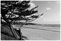 Cypress and Carmel Beach in winter. Carmel-by-the-Sea, California, USA (black and white)