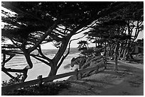 Path and Monterey Cypress bordering beach. Carmel-by-the-Sea, California, USA (black and white)