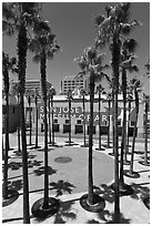 San Jose Museum of Art and palm trees. San Jose, California, USA ( black and white)