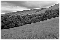 Hills in spring, Evergreen. San Jose, California, USA (black and white)