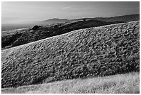 Hills, Santa Teresa County Park. San Jose, California, USA ( black and white)