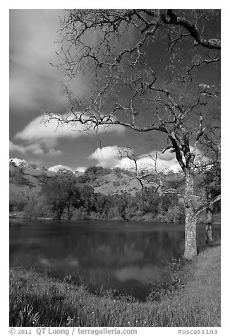 Pond, early spring, Joseph Grant Park. San Jose, California, USA (black and white)