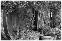 Barells and flowers, Savannah-Chanelle Vineyards, Santa Cruz Mountains. California, USA ( black and white)