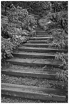 Uphill path, Hakone gardens. Saragota,  California, USA ( black and white)